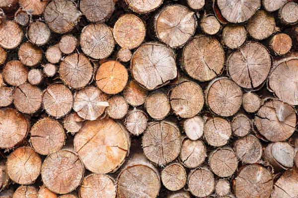 spruce-pine